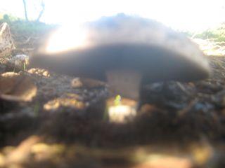 Fall fungi 001